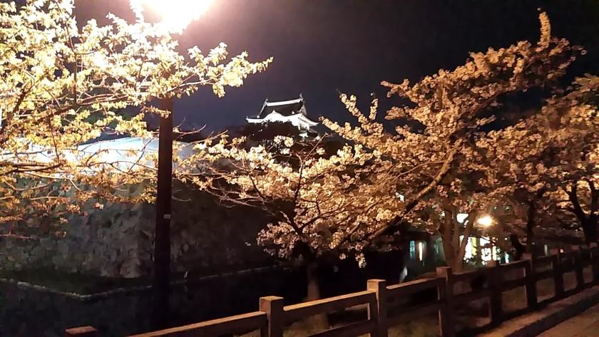 夜桜(*^^*)